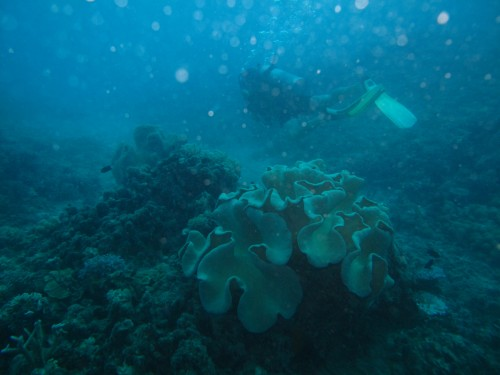 Diving the Great Barrier Reef (45)