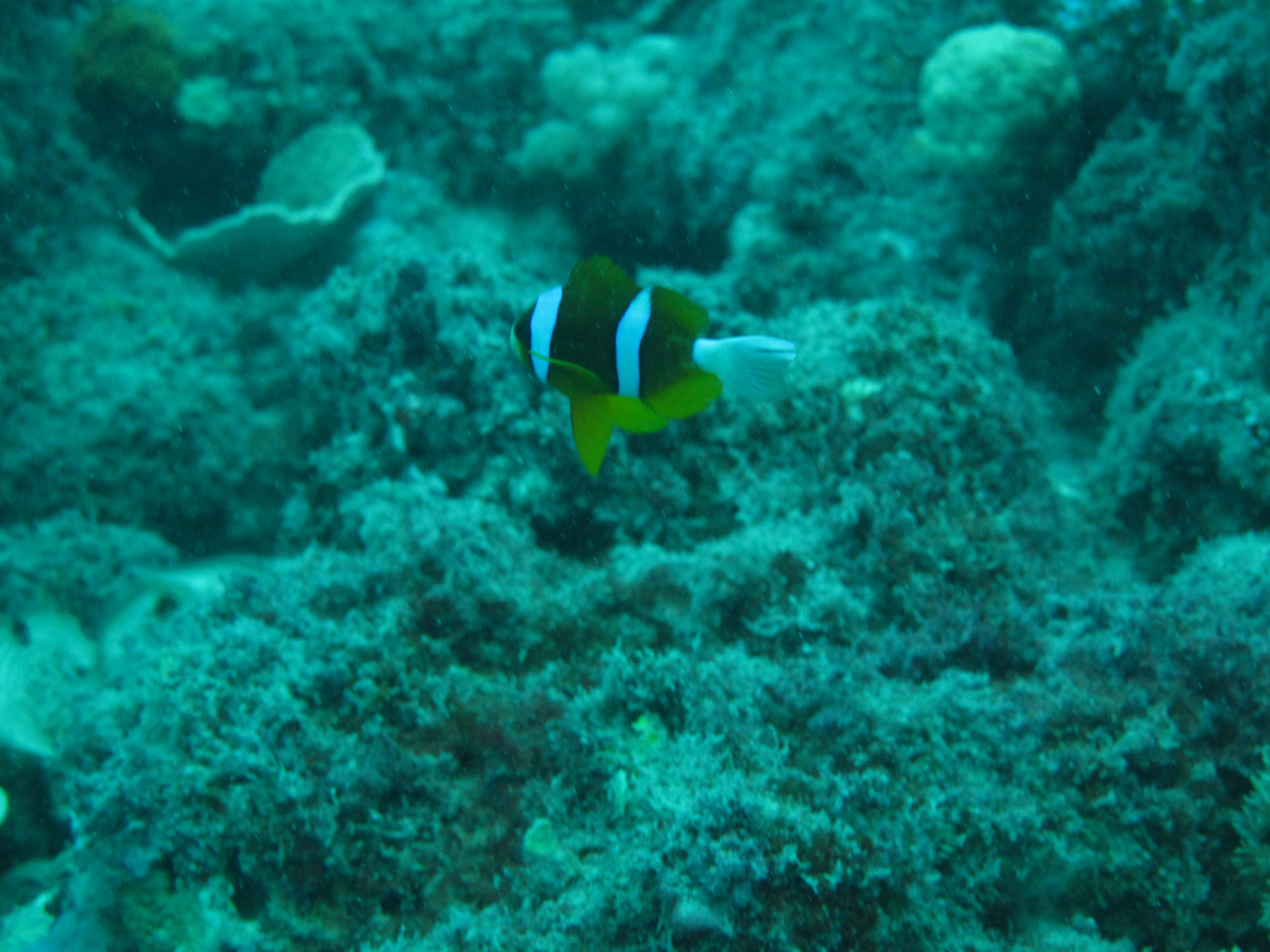 Diving the great barrier reef coast guard couple - Dive great barrier reef ...